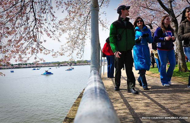 Cherry Blossom Festival visitors. Credit: brmurray, flickr