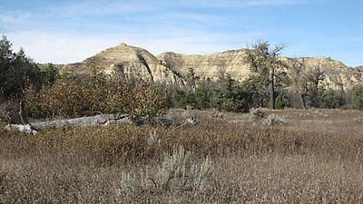 Roosevelt's conservation ideas grew from his time on Elkhorn Ranch.