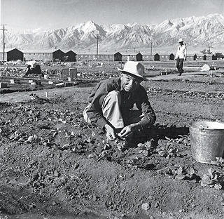 Archive photo of garden at Manzanar