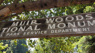 Muir Woods National Monument (2)
