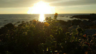 Sunset at Asilomar State Beach (2)