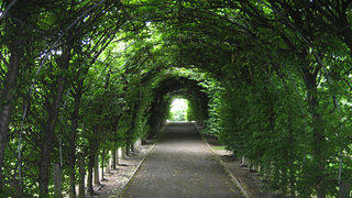 A picture of a walkway in Staten Island's Botanical Gardens.