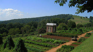 The Vegetable Gardens At Monticello