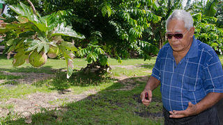Mayor Nua Satini Agatone near breadfruit tree. Photo by Eli Keene