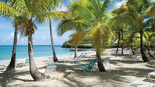 Palm trees and chairs on the beach