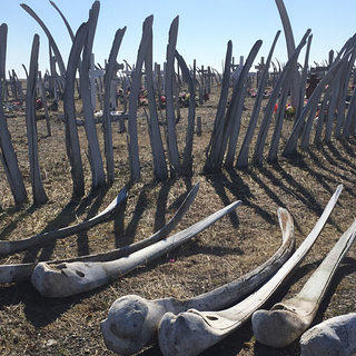 Eroding Edges Alaska Whale Bones Graveyard at Point Hope