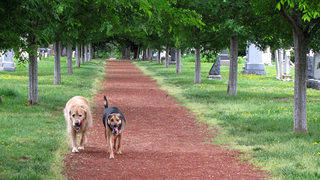 Off-leash dogs enjoying a walk at Congressional Cemetery in D.C.