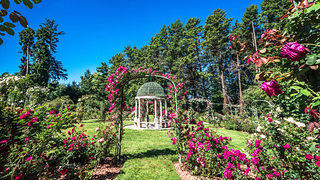 Rose garden at Lyndhurst