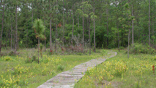 The Big Thicket National Preserve