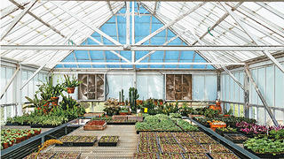 Filoli greenhouse