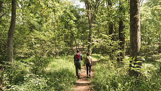 Walking trails on the Montpelier property.