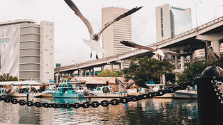 View of the Miami River with seagulls, Little Havana.