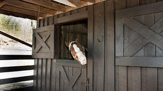 Horse pokes its head out of the renovated Skyland Stables.