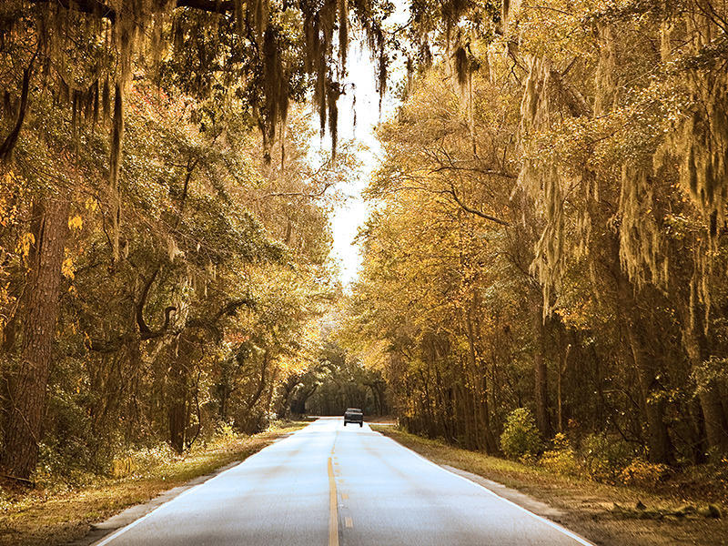 Public Hearing on Proposed Improvements to the Historic Ashley River Road | Ashley River Historic District | National Trust for Historic Preservation