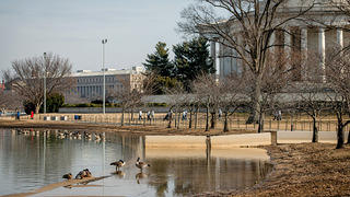 Flooded Tidal Basin on sidewalks, haphazard security barriers, and geese.