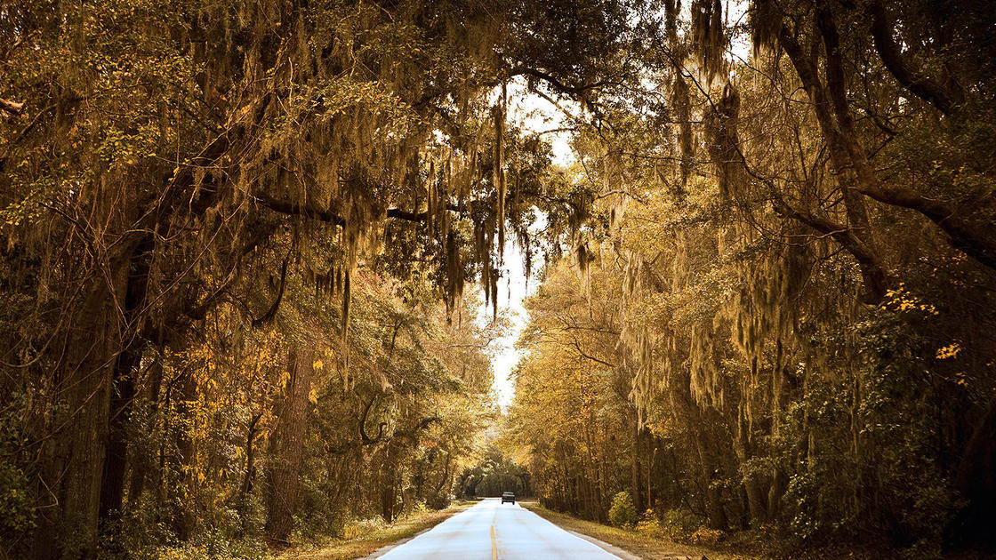 Good News for the Historic Ashley River Road   Ashley River Historic District   National Trust for Historic Preservation
