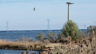 A bird flies across the transmission lines on the James River, with the river and grasses in the foreground.