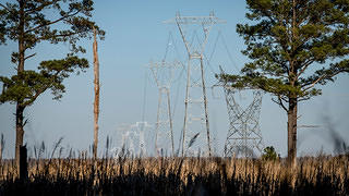 A marshy field of grasses with three ugly transmission lines in the background.