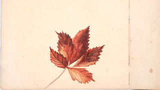 An Autumn leaf watercolor and pencil on paper illustration from October 1880.