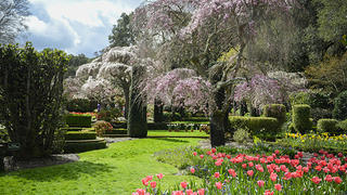 A view of a lush garden. Two flowering trees stand tall with an expanse of grass framed by tulips and other flowers in bright colors.
