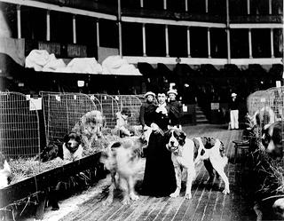 Image of a woman surrounded by  St. Bernard dogs in open kennels with two other figures standing behind her. Standing next to her are two other St. Bernard dogs one who is blurred as if shaking off moisture from fur.